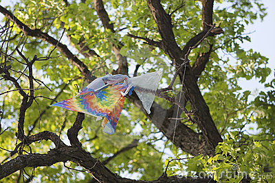 Kite caught in a tree