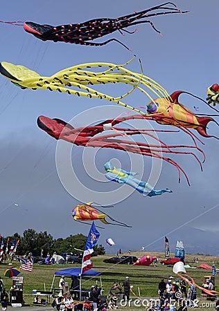 Kite Fest 03
