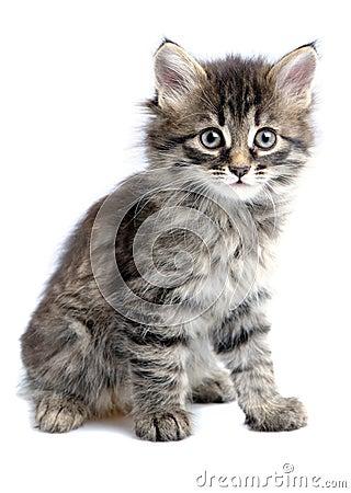Free Kitten Stock Images - 18037754