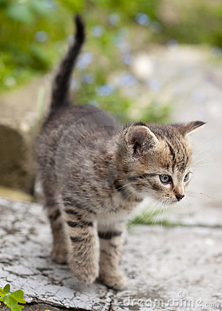 Free Kitten Royalty Free Stock Photo - 18117005