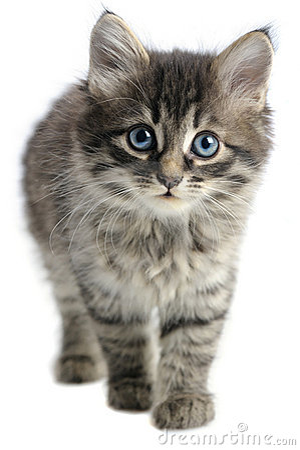 Free Kitten Stock Image - 18119911