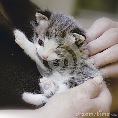 Free Kitten Stock Photography - 27754622