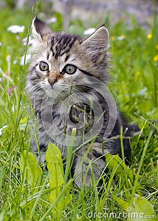 Free Kitten Stock Image - 42047331
