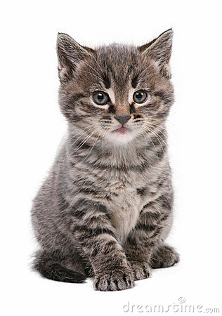 Free Kitten Royalty Free Stock Photo - 7358275