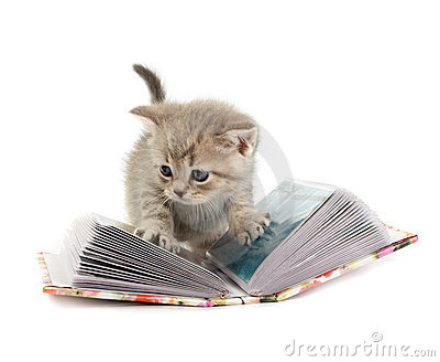 The kitten