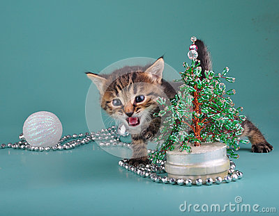 Kitten against Christmas tree