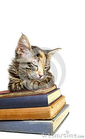 Kitten Asleep on Old Books