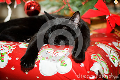 Kitten asleep under a christmas tree