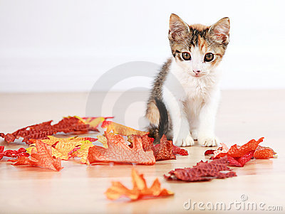 Kitten in autumn leaves