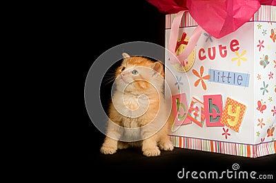 Kitten and baby gift bag