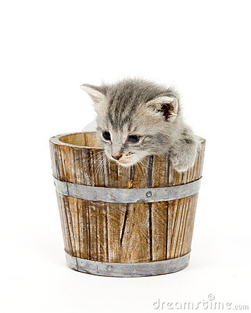 Kitten in a barrel