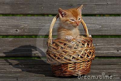 Kitten in a basket.