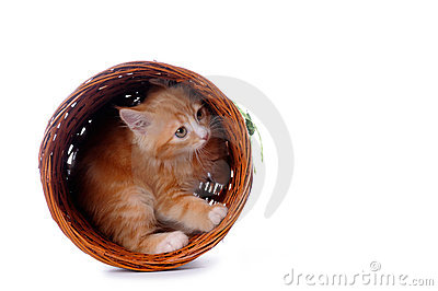 Kitten in a basket isolated on white