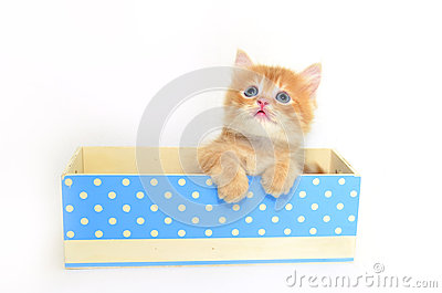 Kitten in blue dot box