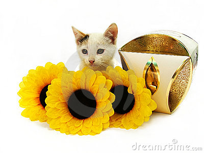 Kitten, box of sweets and yellow flowers