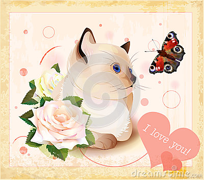 kitten, butterfly and roses