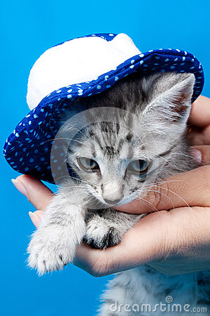 Kitten in a cap