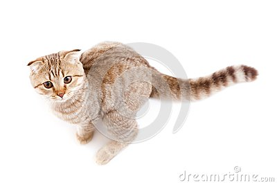 Kitten or cat  striped looks like kangaroo