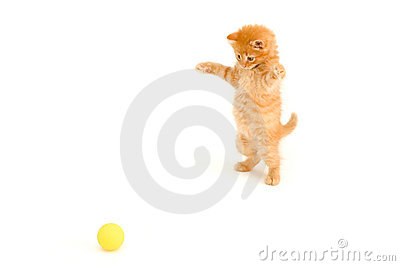 Kitten catch ball
