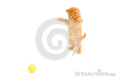Kitten catch ball