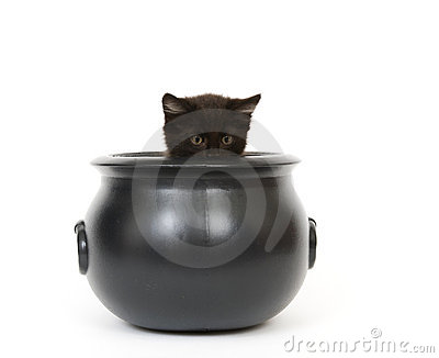 Kitten in a cauldron