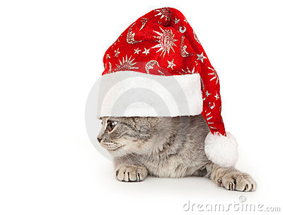 Kitten in Christmas hat.