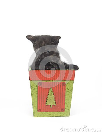Kitten In Christmas Pot Royalty Free Stock Photography - Image: 5085507