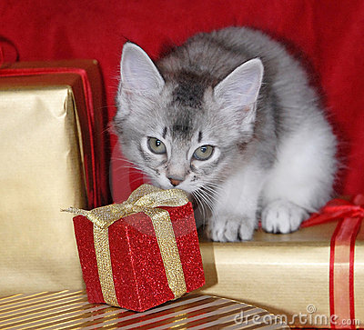 Kitten with Christmas presents