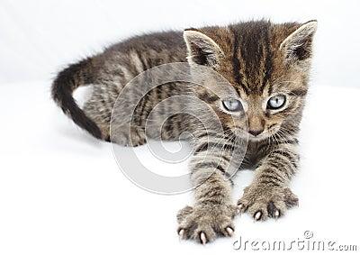 Kitten clawing