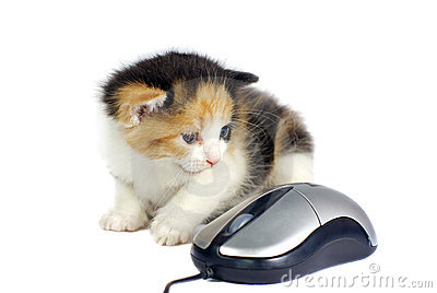 Kitten and computer mouse isolated
