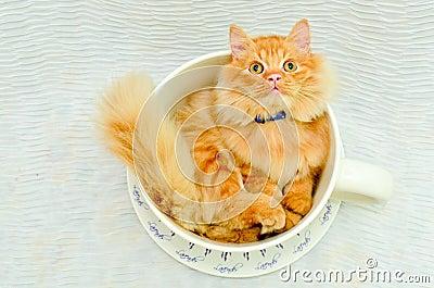 Kitten in cup