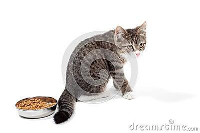 Kitten eats a dry feed