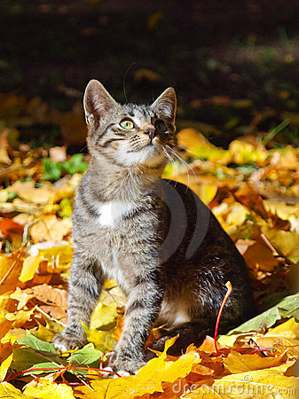 Kitten and Fall