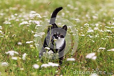Kitten in field