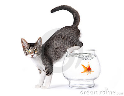 Kitten On a Fishbowl