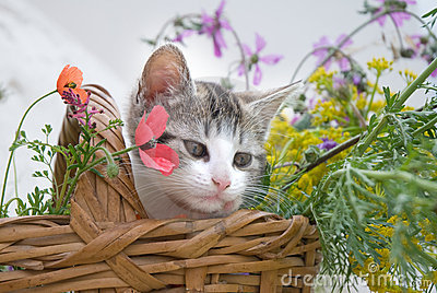 Kitten in flower basket