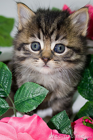 Kitten in flowers.