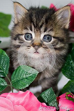 Kitten in flowers.