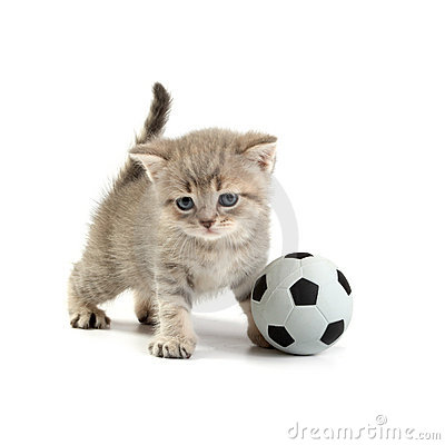 Kitten and a football