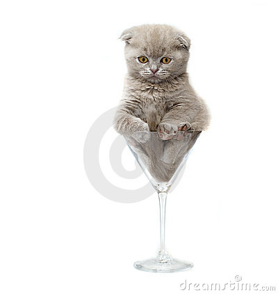 Kitten in a glass