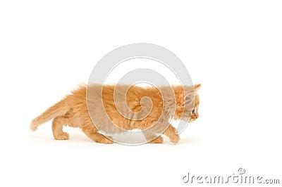Kitten go