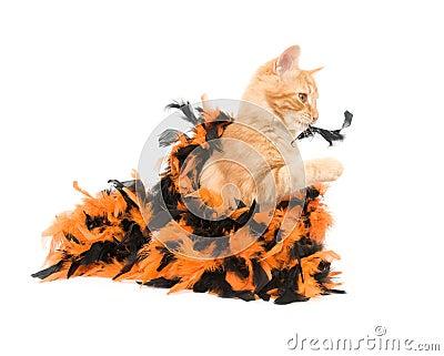 Kitten and halloween decoration