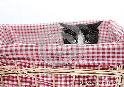 Kitten hiding