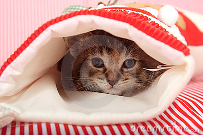 Kitten hiding in Christmas stocking