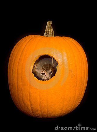 Kitten hiding in a pumpkin