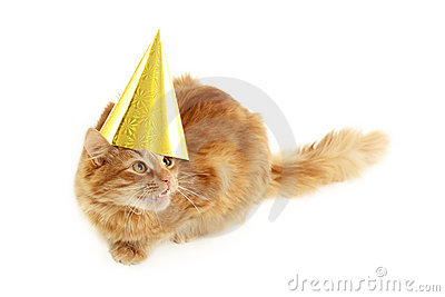 Kitten holiday with birthday golden cap