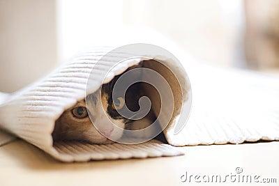 The kitten homesick