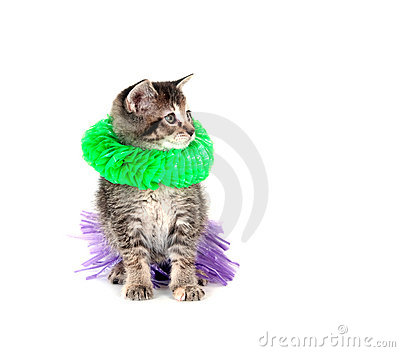 Kitten with hula skirt and green lay