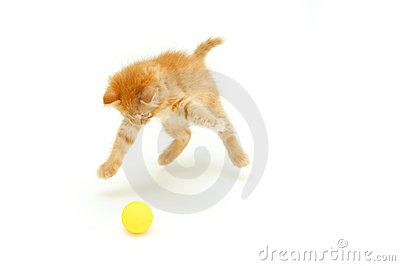 Kitten hunts for ball