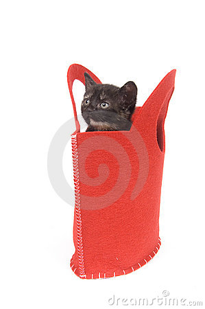 Free Kitten In A Red Bag Stock Image - 5475581